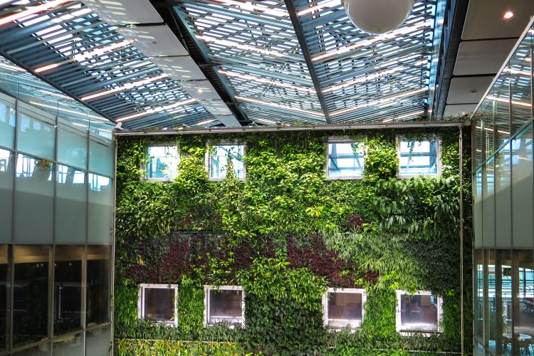 "a ""green wall"" of plants at an indoor growing facility"